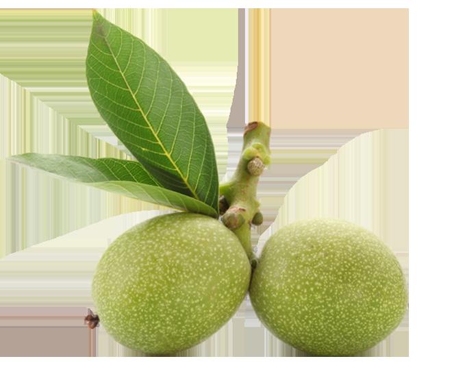 Fruit Animate