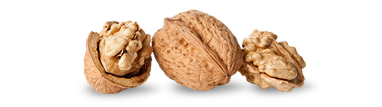 Nuts  Animate